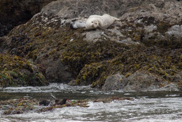 Seal_pup-7