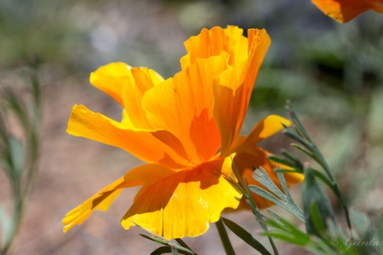 flowers-5615