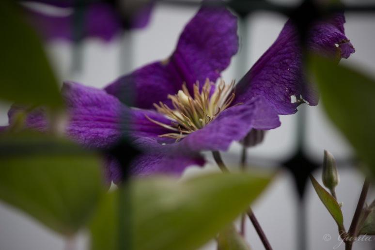 flowers-5833