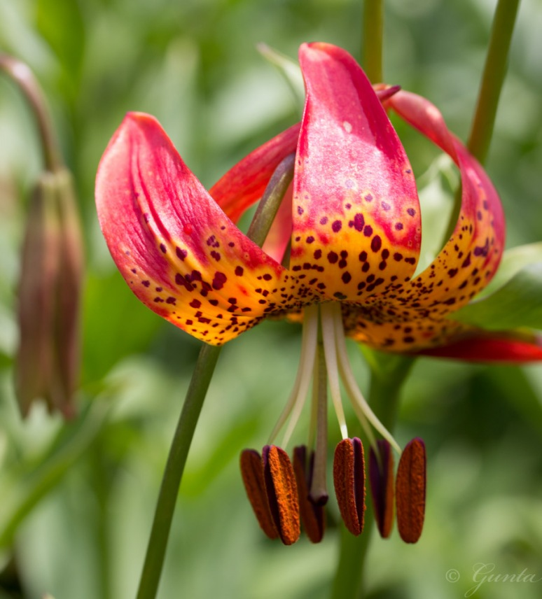 flowers-5940