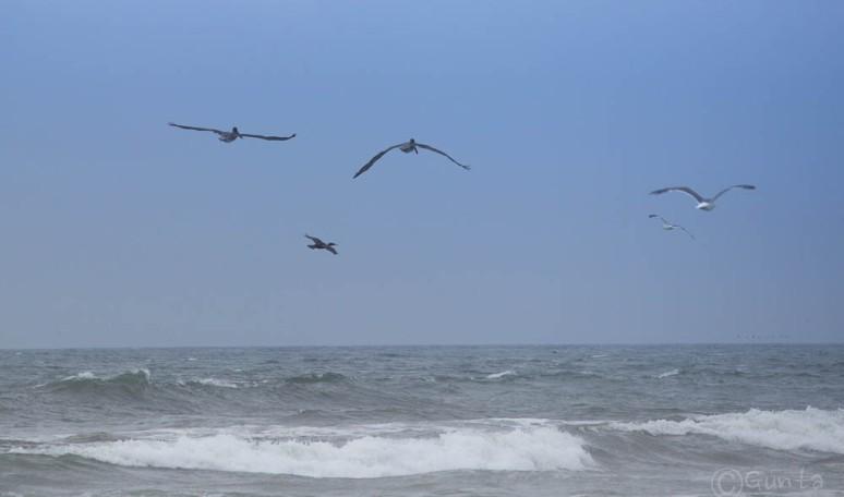 birds-6393