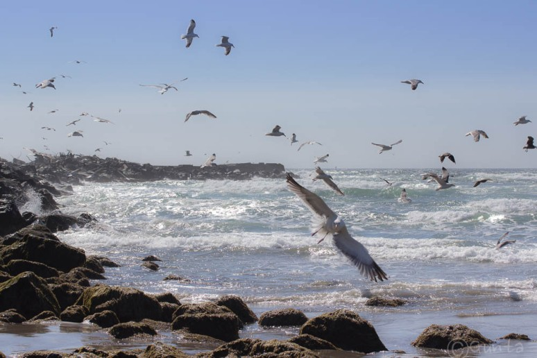 birds-6493