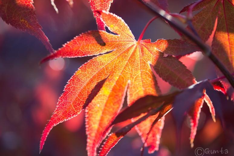 autumn-9773