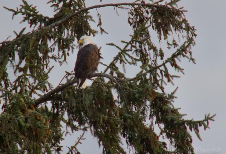 eagles-4
