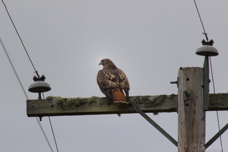 Hawk-0224