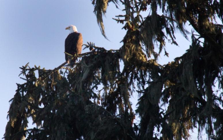 birds-0545