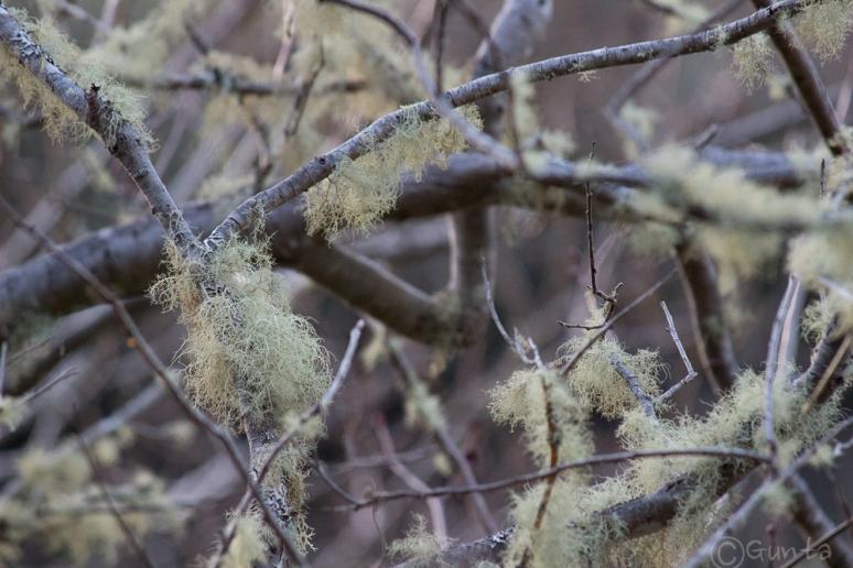 lichens-0733
