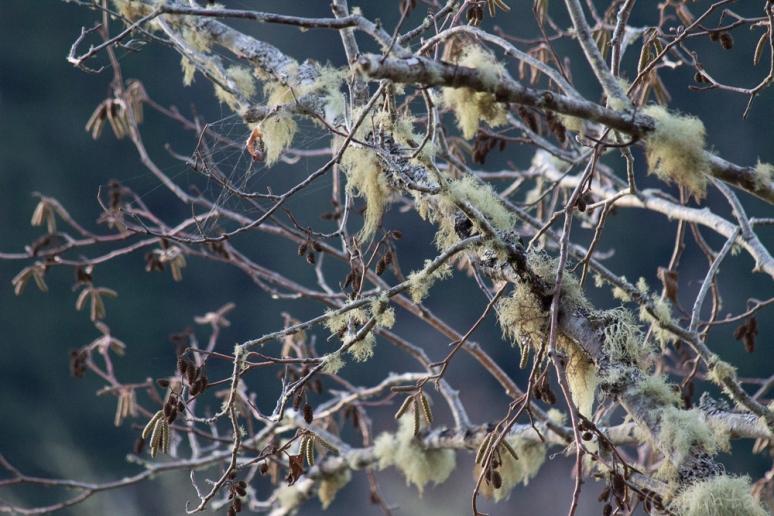 lichens-0734