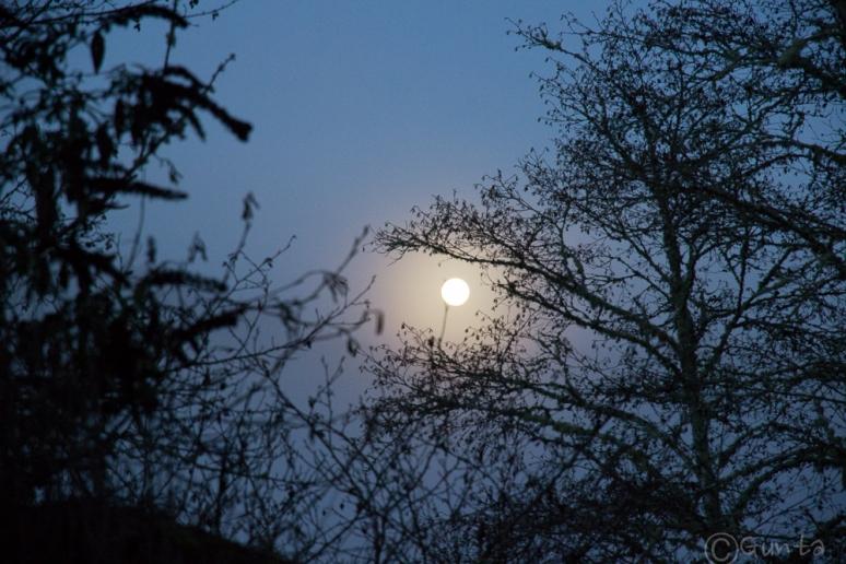 moon-0614