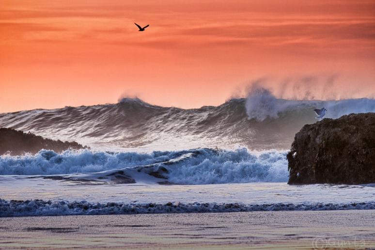 waves-0889