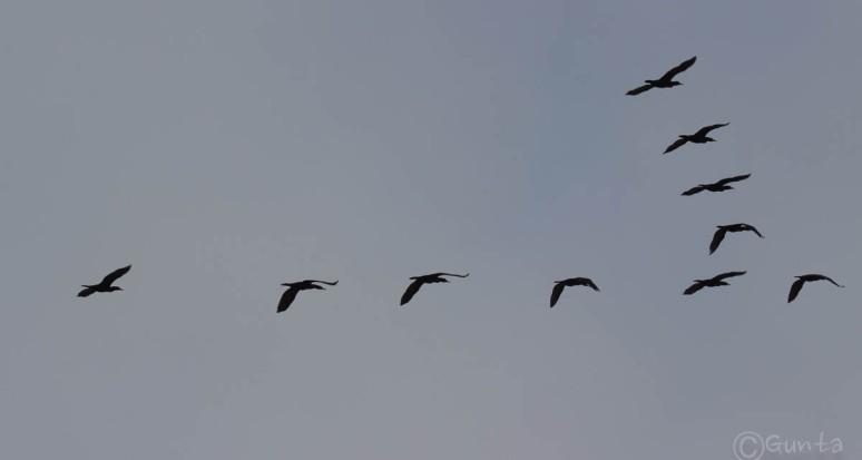 birds-2630