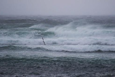 waves-3158
