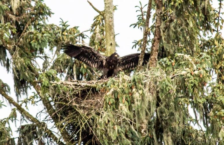 eaglet-4695