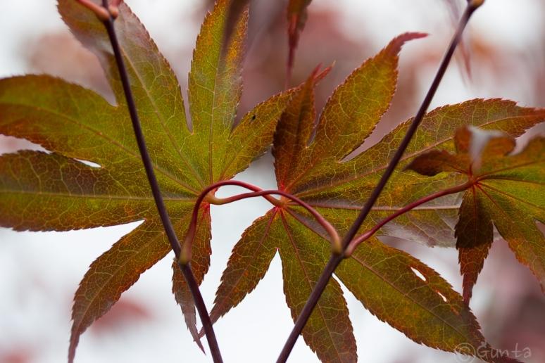 leaf-6801