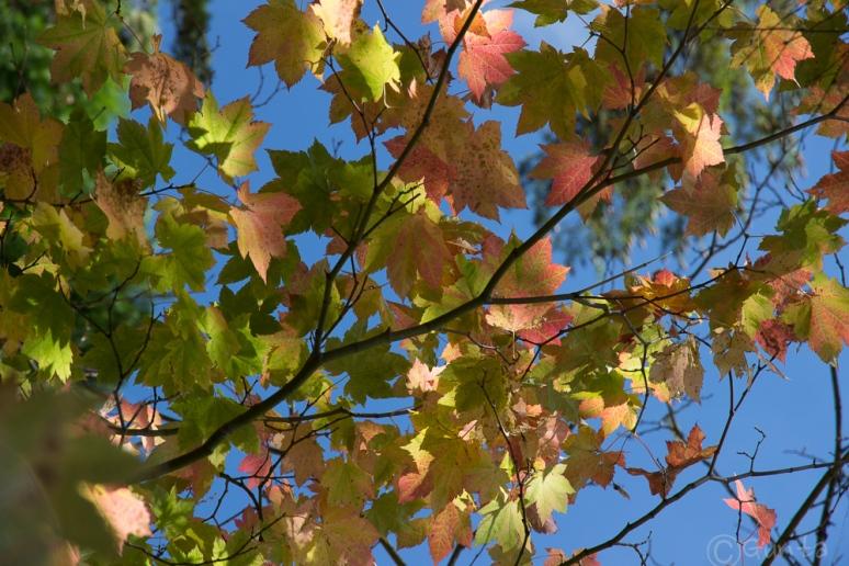 leaves-7878