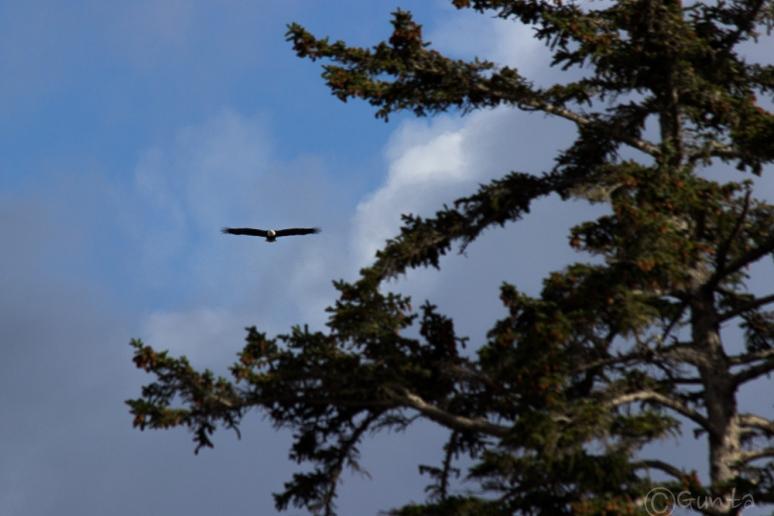 eagle-9043