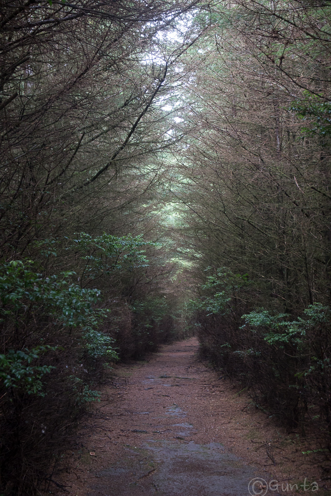 path-8308