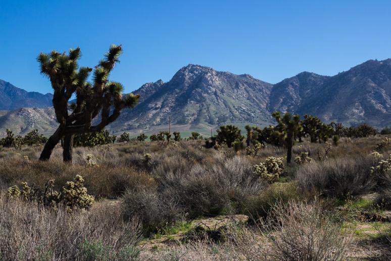 Mojave-0089