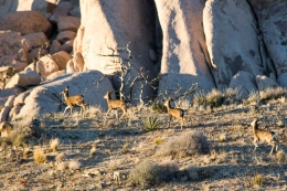 We caught a glimpse of these deer down in the valley below us.