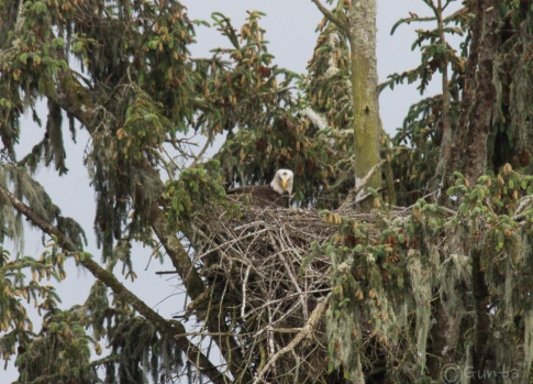 I didn't think the shots of the head bobbing down into the nest were worth showing, but they added to my suspicion.
