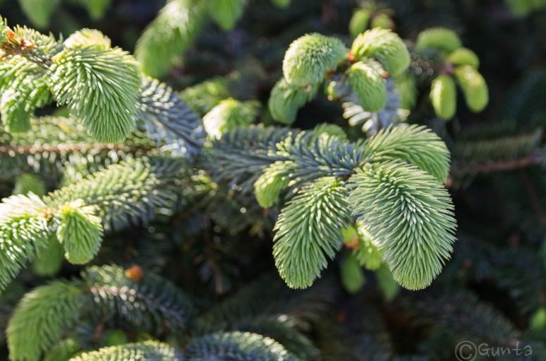 green-1749