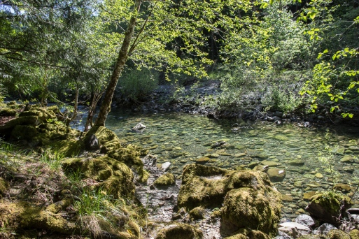Easy to see how Rocky Creek got its name