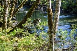 peeping through the spring-green leaves