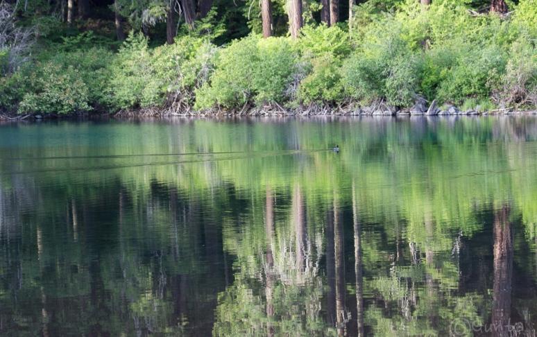Clear_Lake-4261