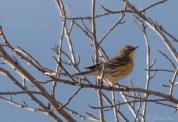 Confusing Fall Warbler posing