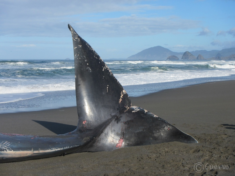 blue_whale-0500