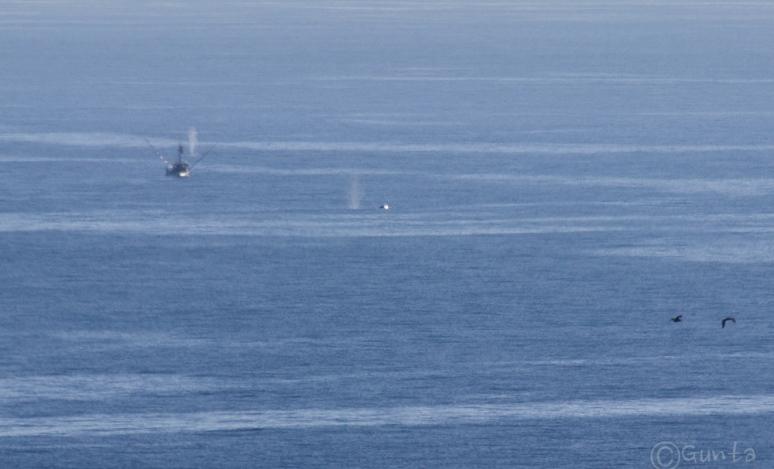 whale-5618
