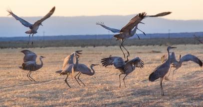 cranes-5491