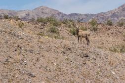 Arizona-6573