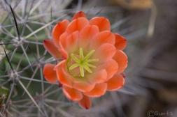 Bosque_del_Apache-7133