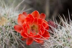 Bosque_del_Apache-7141