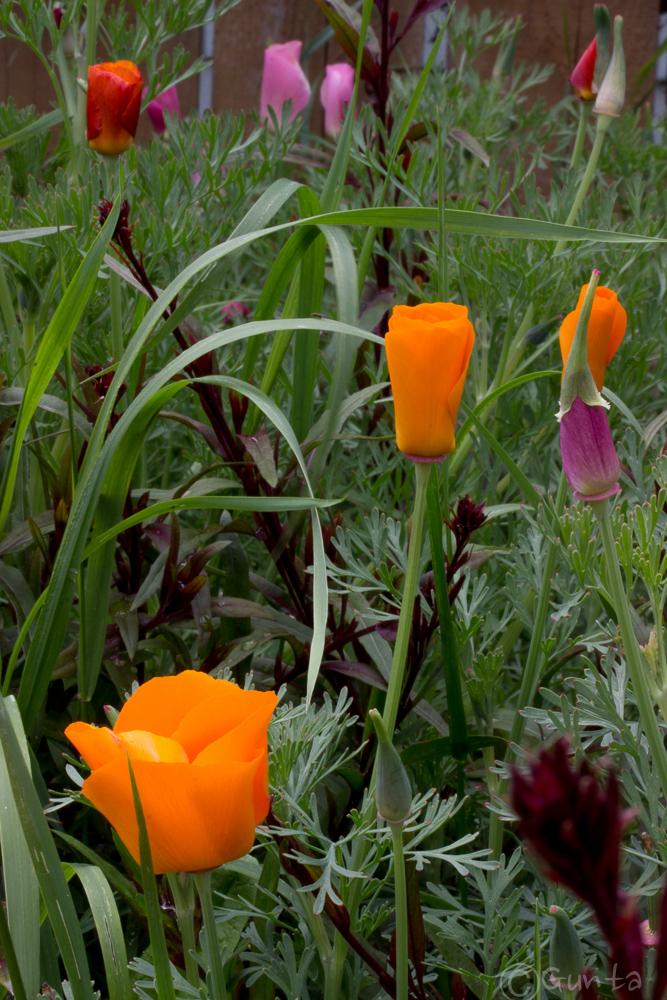 flowers-8136