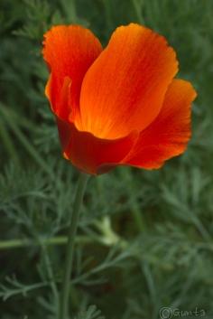 flowers-8138