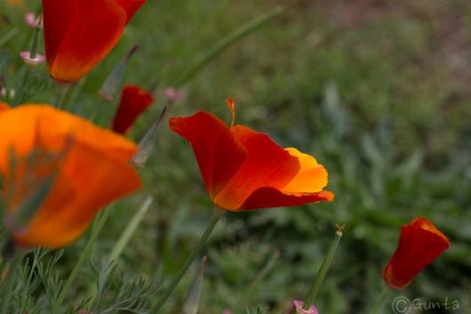 flowers-8140
