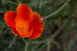 flowers-8141
