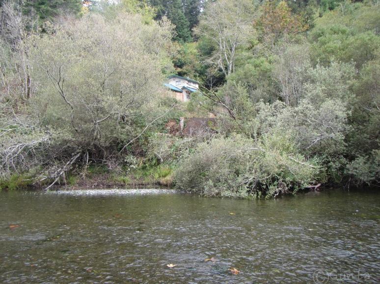 creek-1217