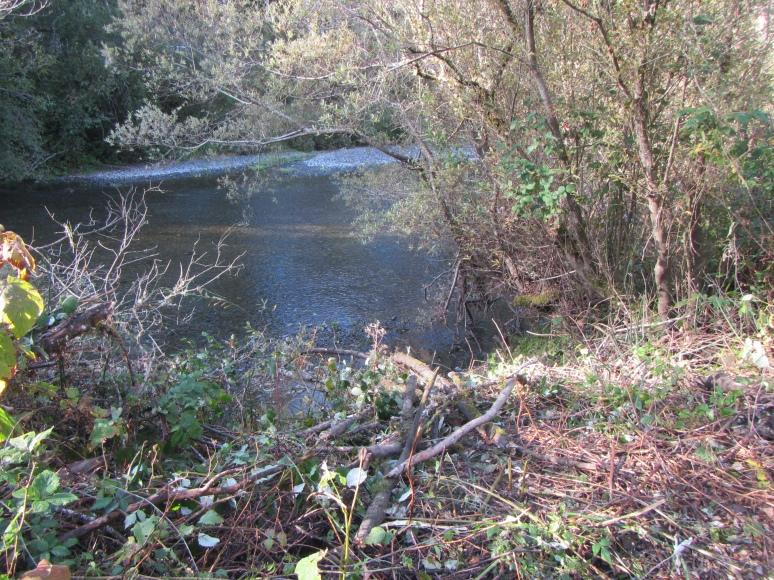 creek-1242
