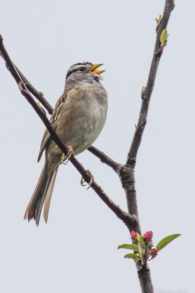 birds-0572