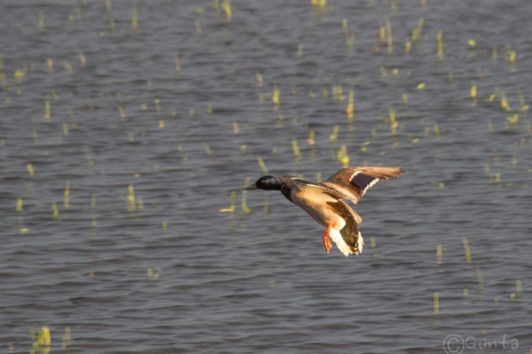 birds-0595