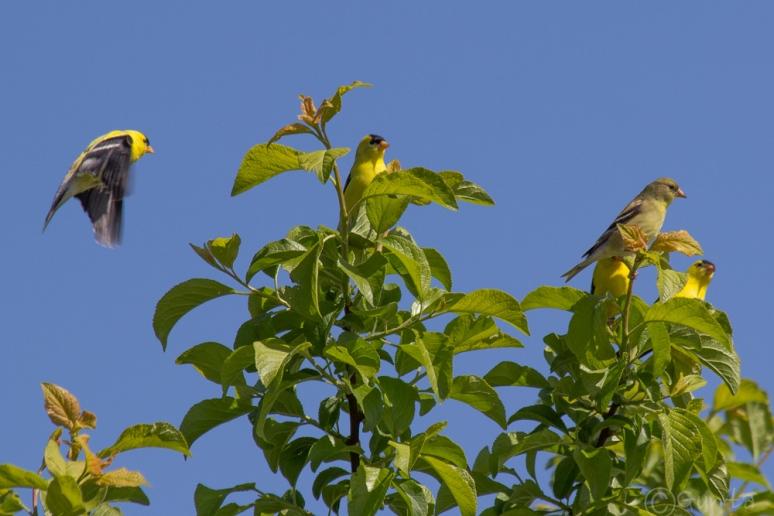 birds-1025