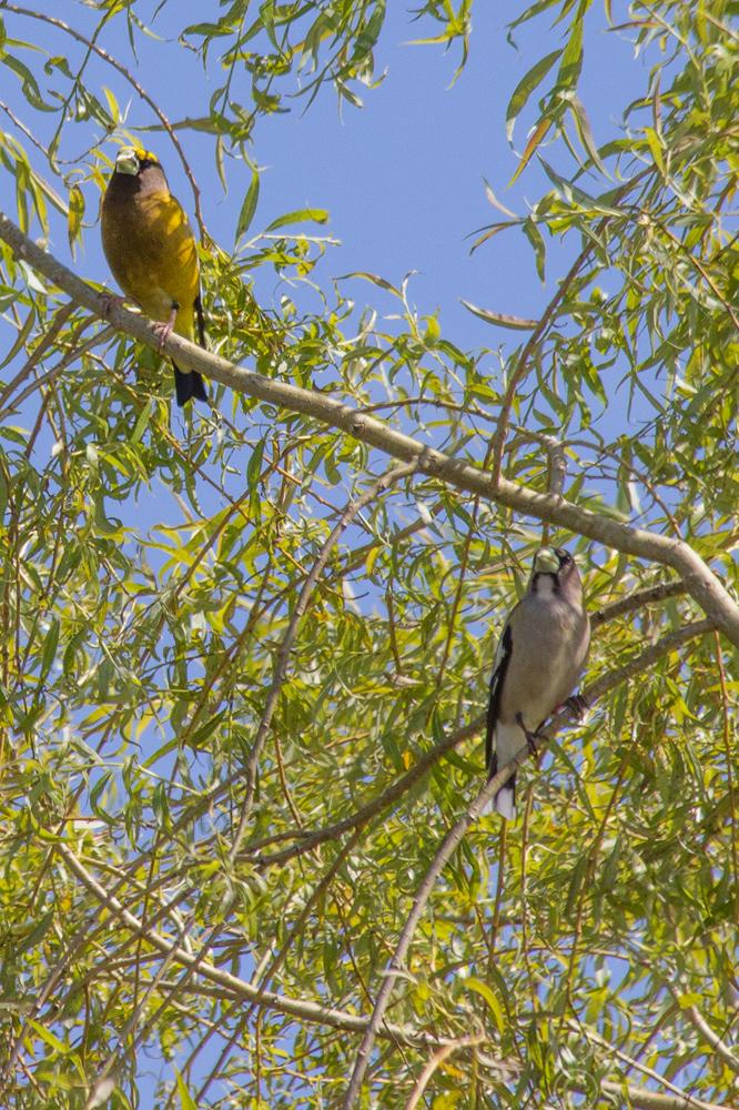 birds-1029