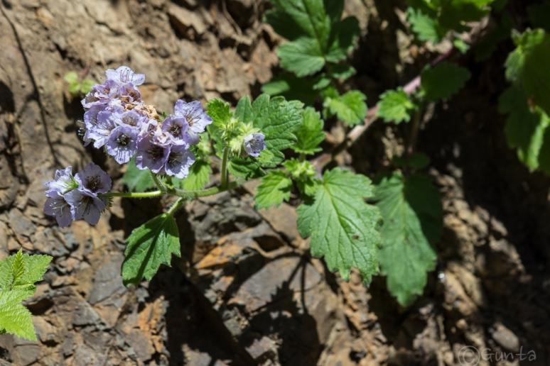 flower-1404
