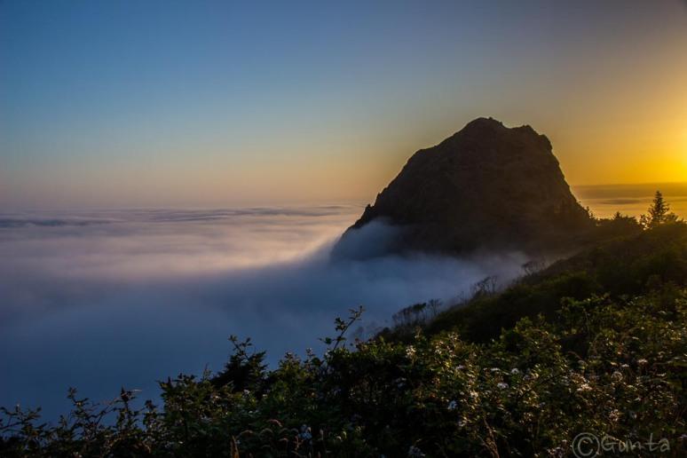 fog-2017