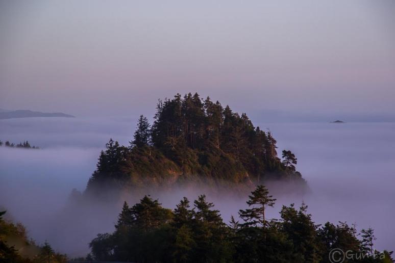 fog-2023