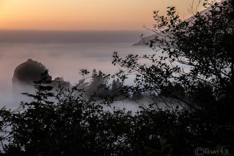 fog-2043