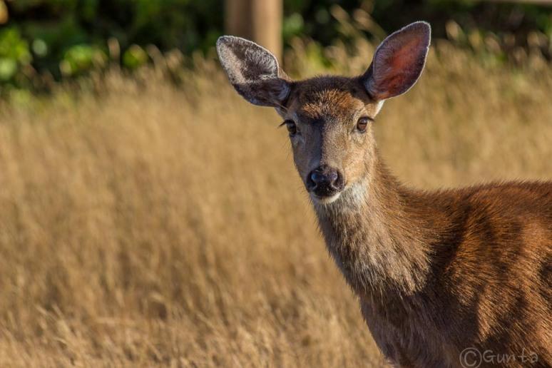 deer-2294